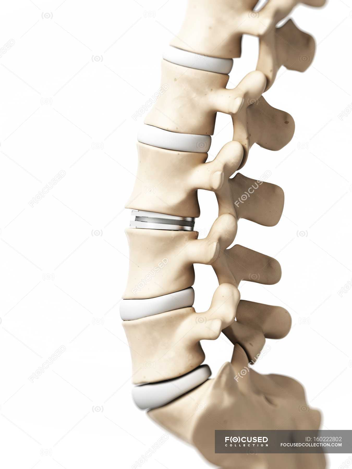 Lumbar spine anatomy — Stock Photo | #160222802