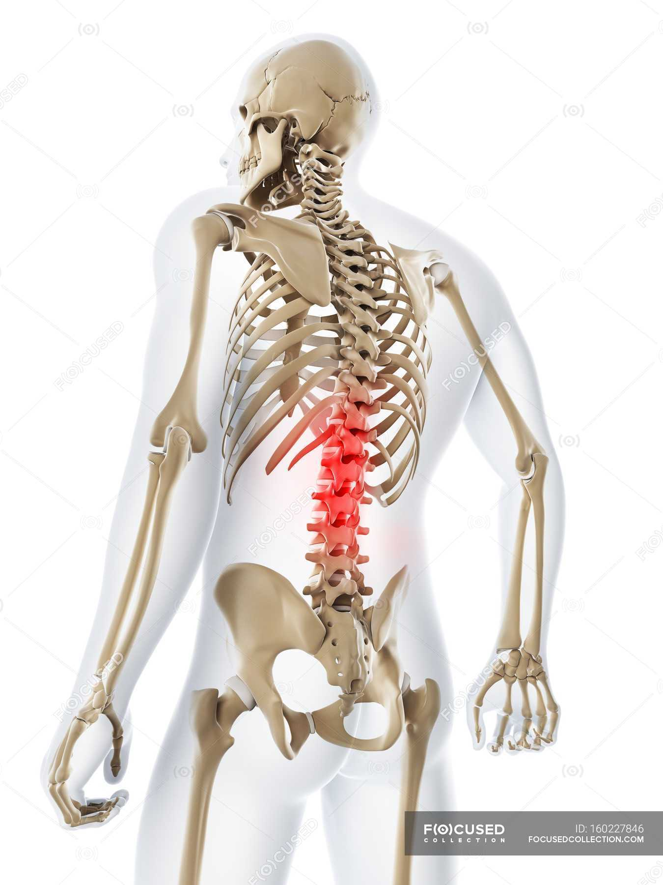 Lower Back Pain White Background Rear View Stock Photo 160227846