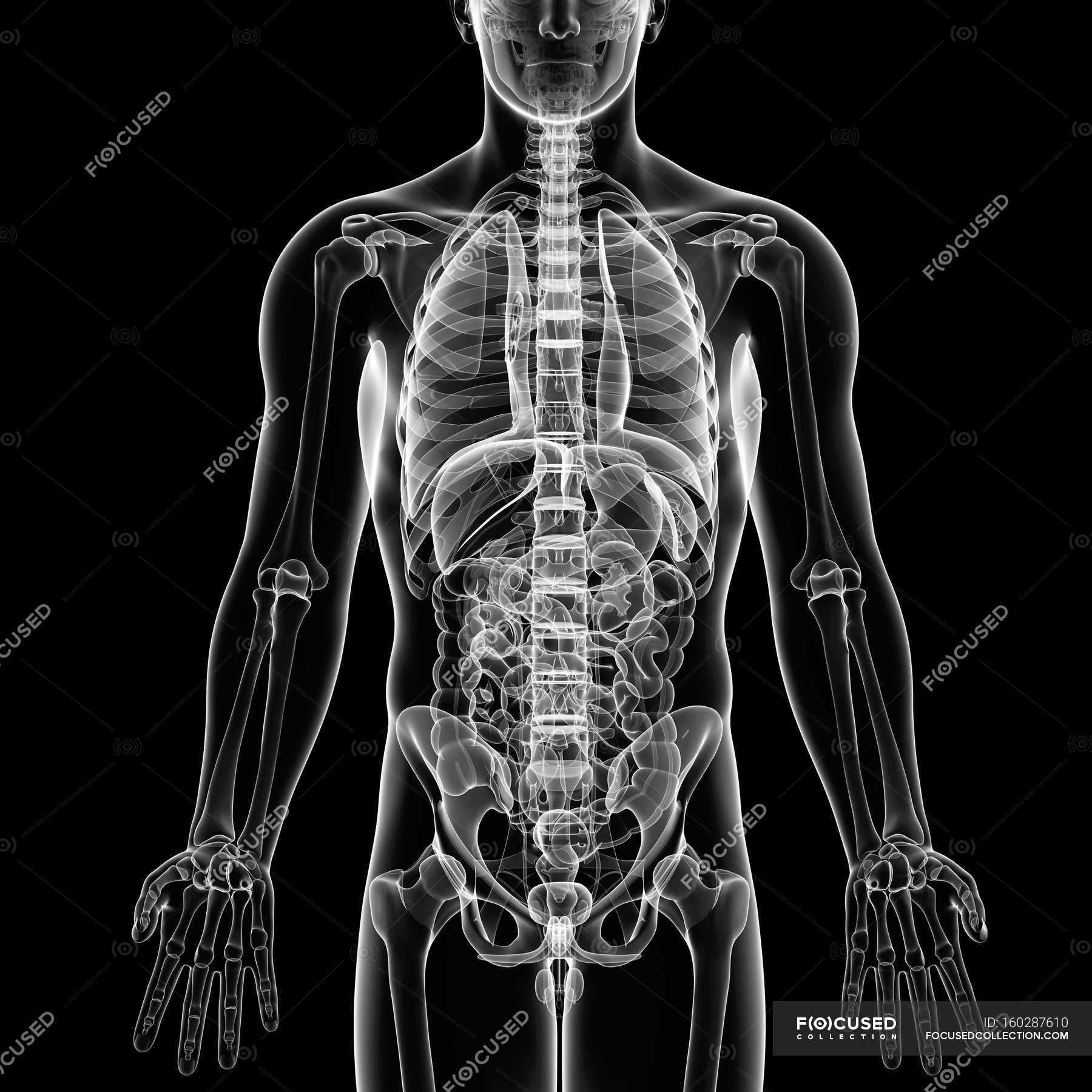 Visual render of Male anatomy — Stock Photo | #160287610