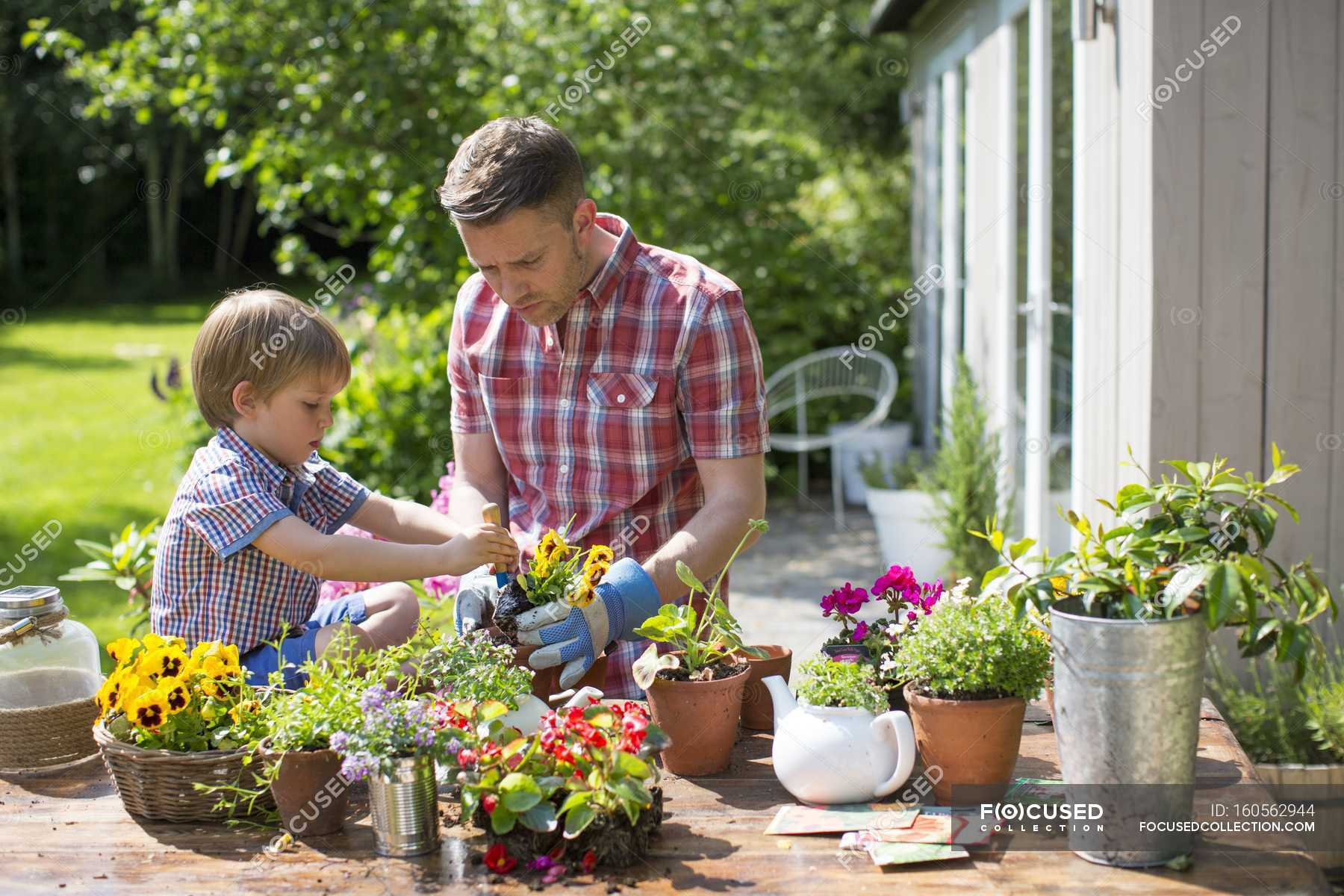 Father And Son Potting Up Plants In Garden Flowers Gardening Stock Photo 160562944