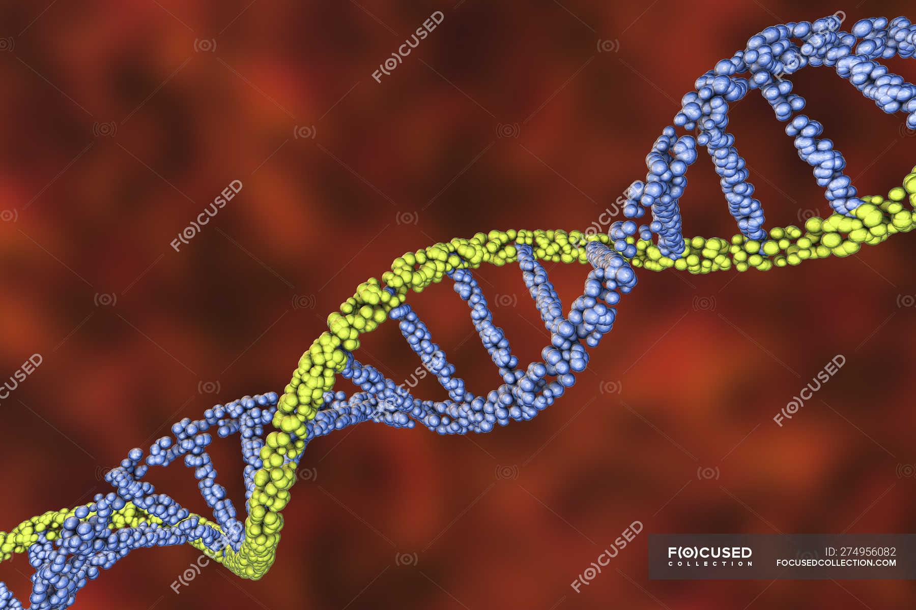 dna nucleotide ba self reliance - 650×433