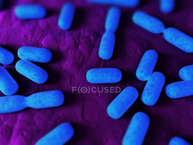 Dividing bacteria on tissue surface — Stock Photo