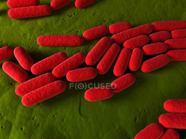 Rod-shaped bacterial organisms — Stock Photo