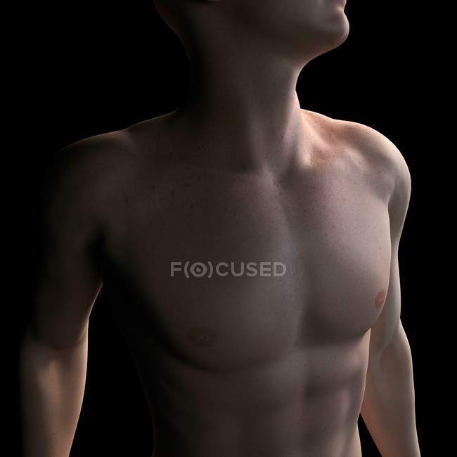 Male torso, computer artwork. — Stock Photo