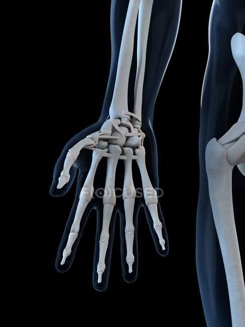 Vista delle ossa della mano — Foto stock