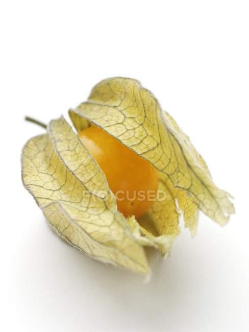 Close-up view of physalis fruit. — Stock Photo