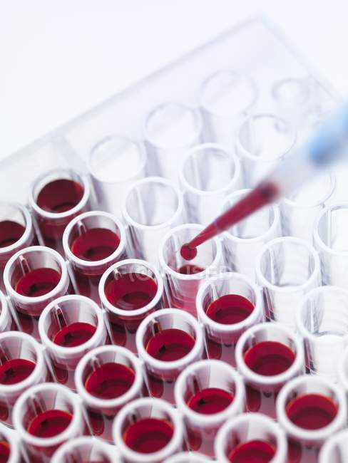 Образцов крови в пробирках — стоковое фото