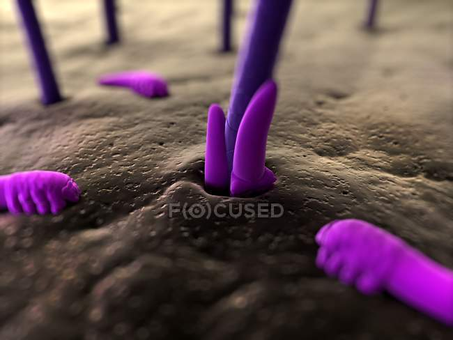 Human Eyelash Mites Human Body Biomedical Illustration Stock
