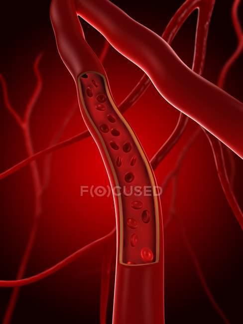 Glóbulos rojos en una arteria - foto de stock