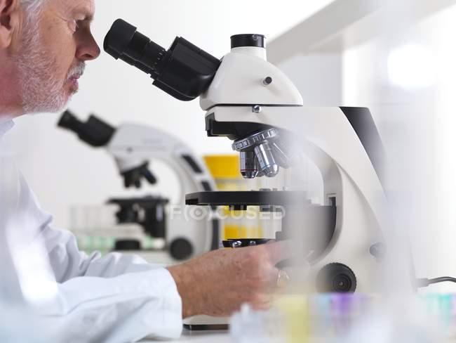 Mature scientist using light microscope in laboratory. — Stock Photo