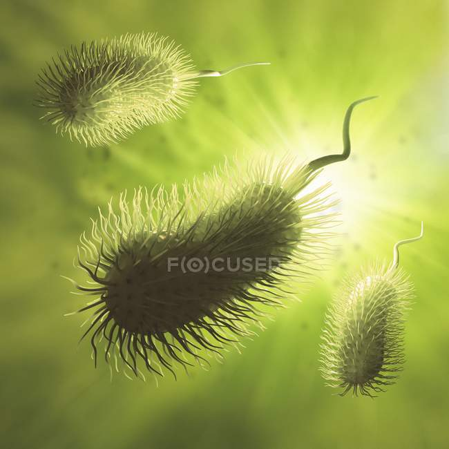 Rod-shaped bacteria with flagellum — Stock Photo