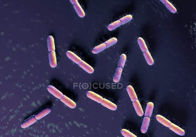 Colony of escherichia coli bacteria — Stock Photo