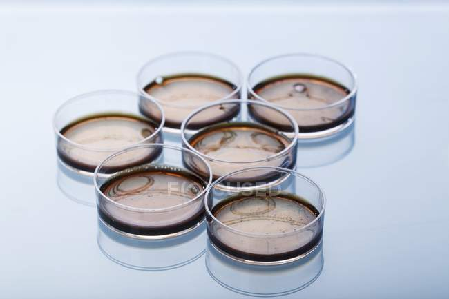 Petri dishes with biomedical samples. — Stock Photo