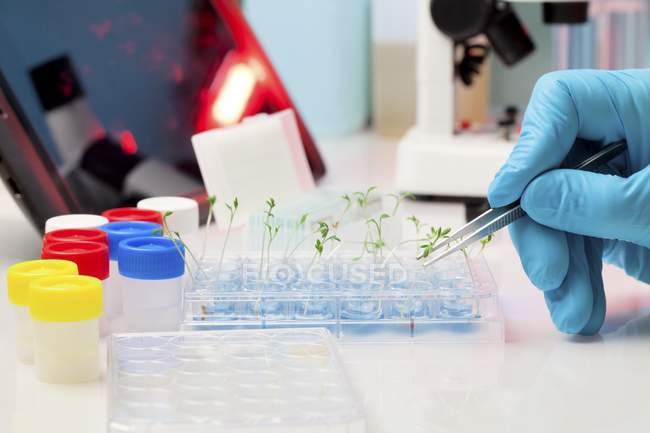 Close-up of scientist planting seedlings into test tubes. — Stock Photo