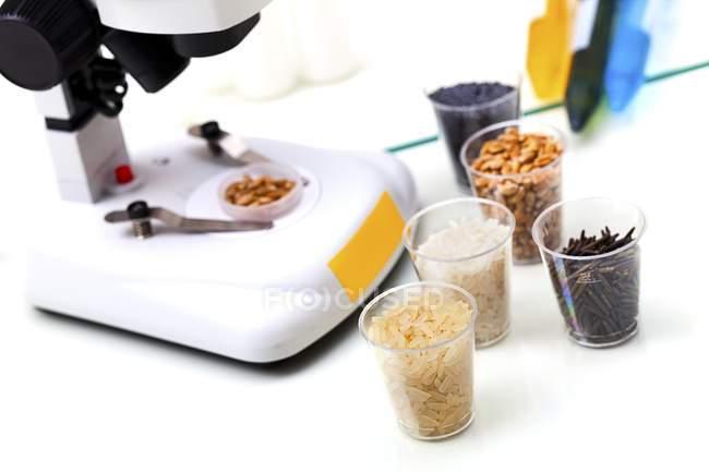 Arroz e milho em recipientes com equipamento de laboratório para pesquisa de alimentos . — Fotografia de Stock
