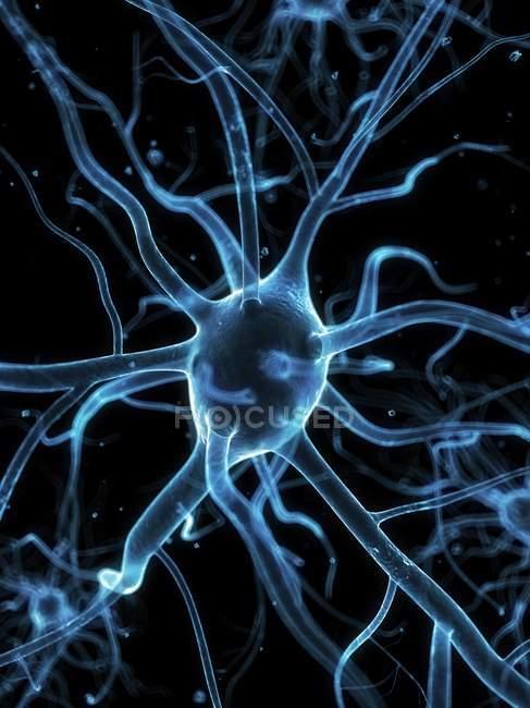 Células nerviosas y axones - foto de stock