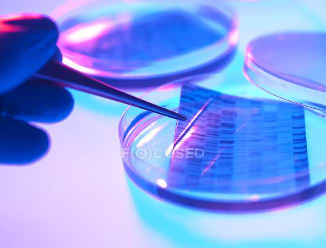 Close-up of petri dishes and hand with pipette for genetic research. — Stock Photo