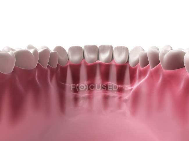 Human teeth anatomy — Stock Photo