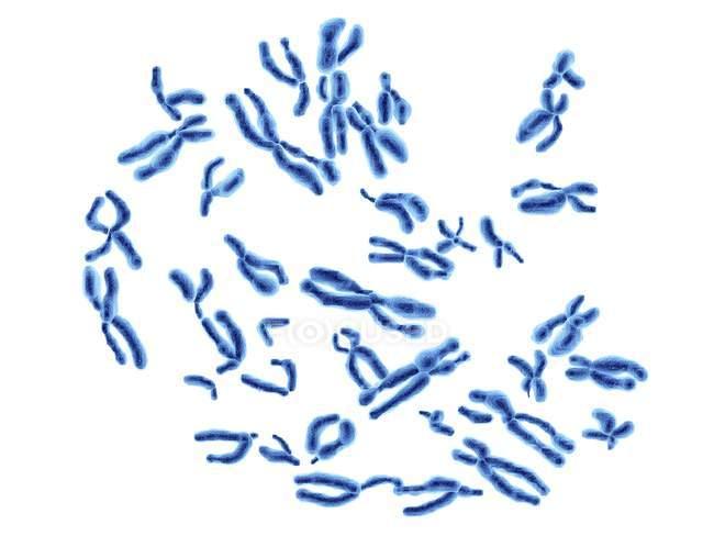 Cromosomi umani normali — Foto stock