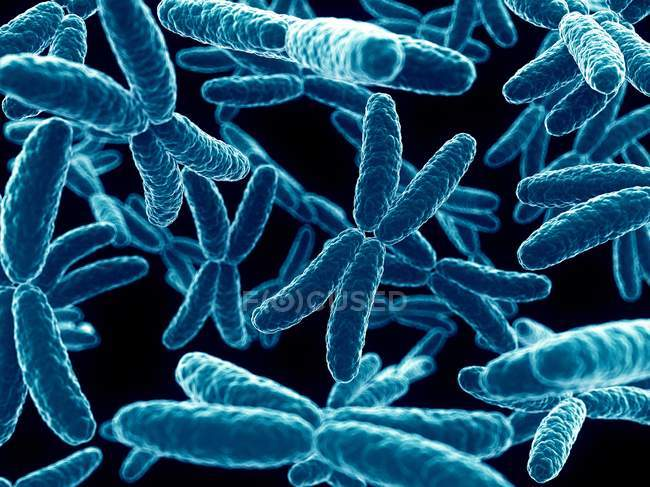Cromosomas x humanos - foto de stock