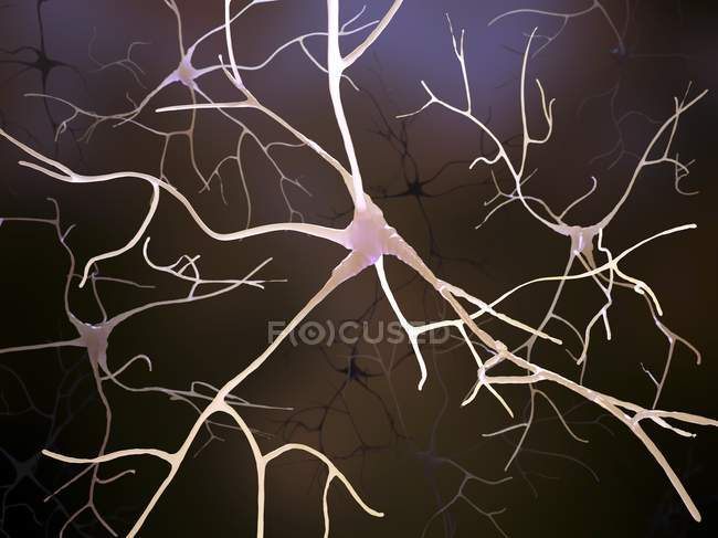 Nerve cells and axon structures — Stock Photo