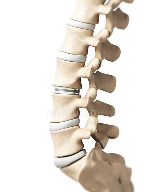 Lumbar Spine Anatomy Stock Photo 160222802