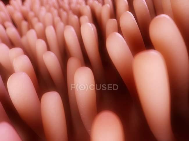 Anatomía del revestimiento intestinal - foto de stock