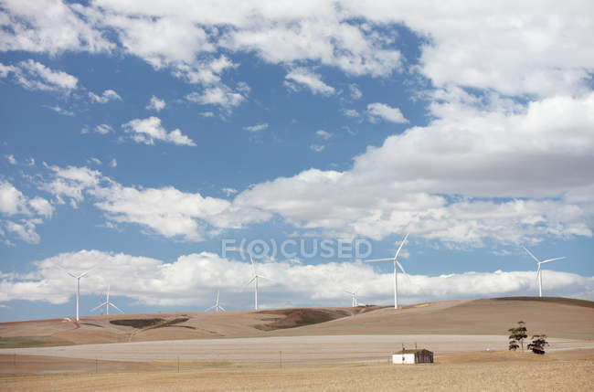 Landscape with windfarm in field in Overberg, Western Cape, South Africa. — Stock Photo
