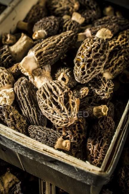 Vista ravvicinata della cassa con funghi spugnola . — Foto stock