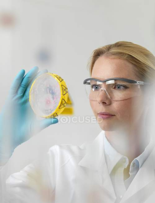 Female scientist examining cultures in petri dish. — Stock Photo