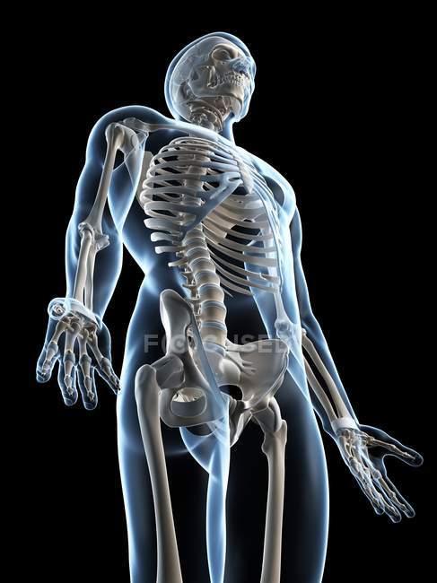 Skeletal anatomy revealing arm bones — black background