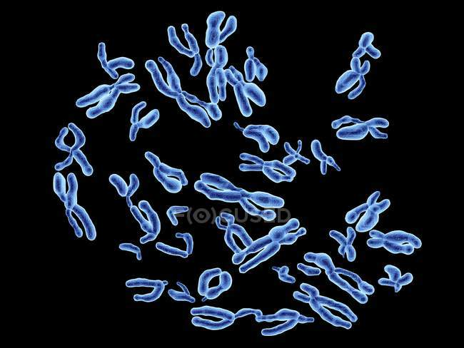 Normal human chromosomes — Stock Photo