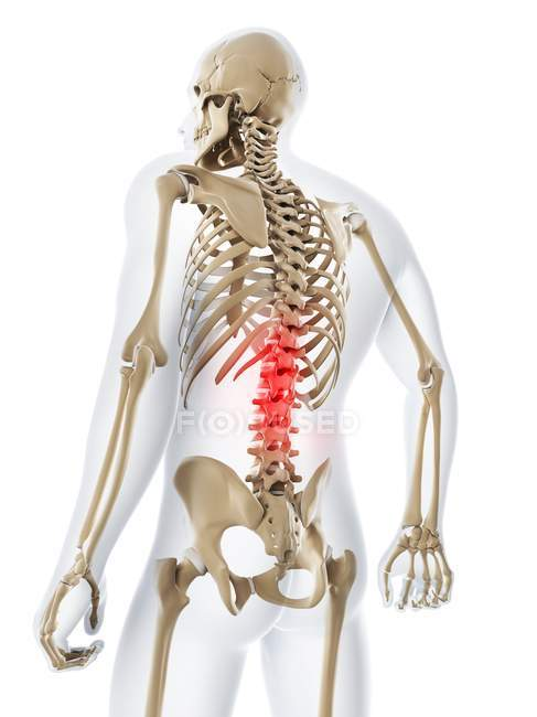 Lower back pain stock photo 160227846 lower back pain stock photo ccuart Gallery