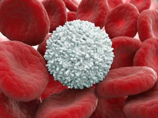 Glóbulos rojos y blancos sanos - foto de stock