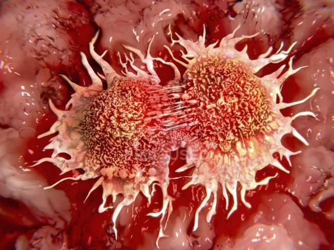 Cellule tumorali che si dividono — Foto stock