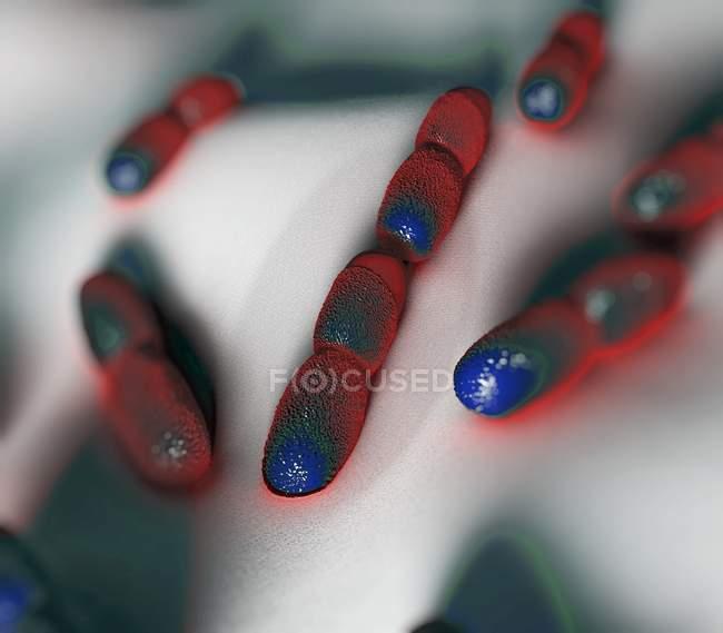 Pathogenic Listeria bacteria — Stock Photo