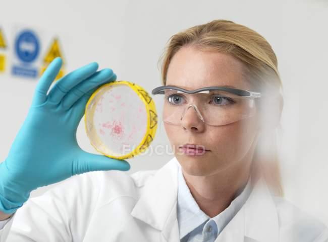 Cientista feminina examinando culturas em placa de Petri . — Fotografia de Stock