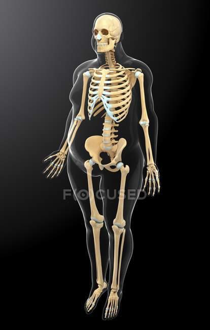 Human skeletal system — Stock Photo | #160229148