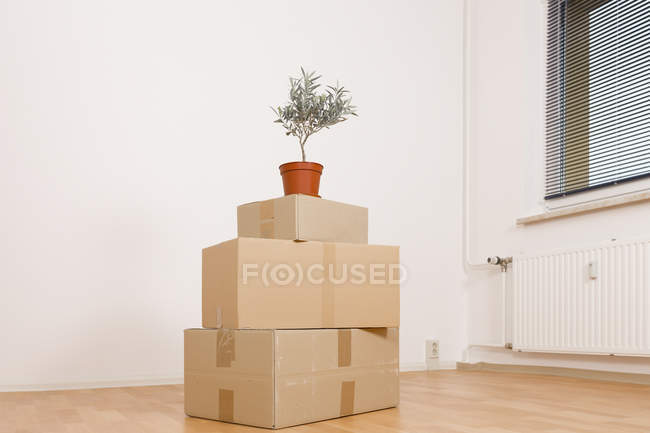 Stack of cardboard boxes with potted plant on top. — Stock Photo