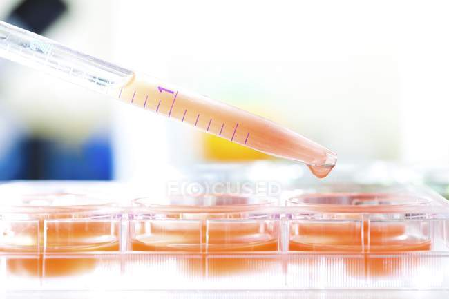 Close-up of pipetting sample for biological research. — Stock Photo