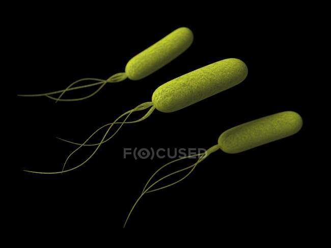 Pseudomonas bacteria on black background — Stock Photo