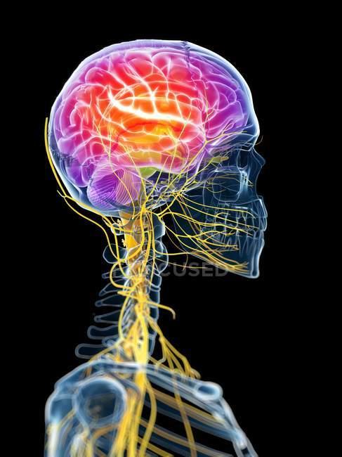 Visualizzazione attiva del cervello — Foto stock