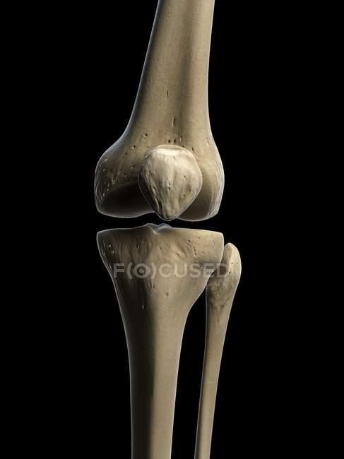Renderizado visual de huesos de rodilla - foto de stock