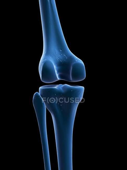 Visuelle Render Knie Knochen — Stockfoto | #160289636