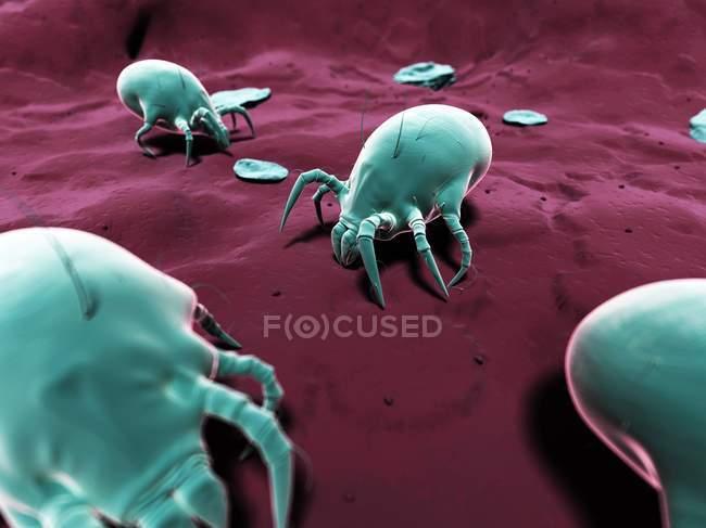 Microscopic Dust mites on floor — Stock Photo