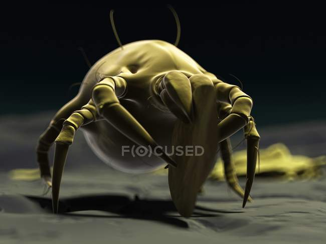 Ácaro del polvo que consume escamas de la piel - foto de stock