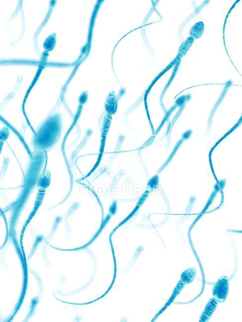 Gesunde menschliche Spermien — Stockfoto