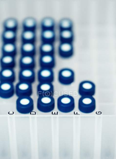 Laboratory sample tubes in rack. — Stock Photo