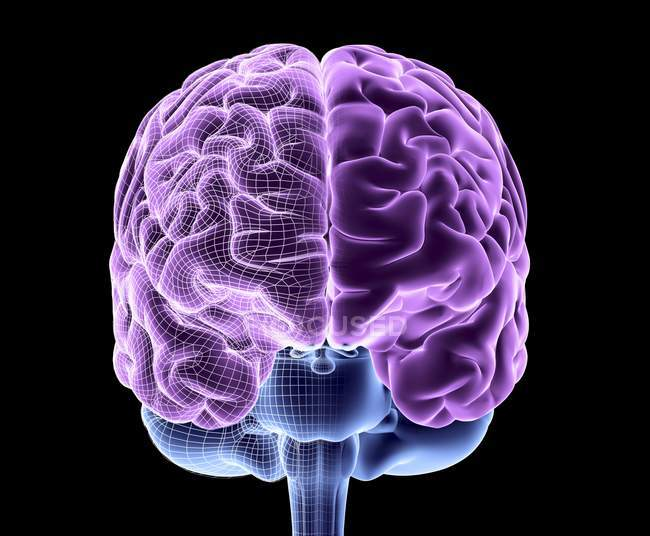 Healthy human brain — Stock Photo