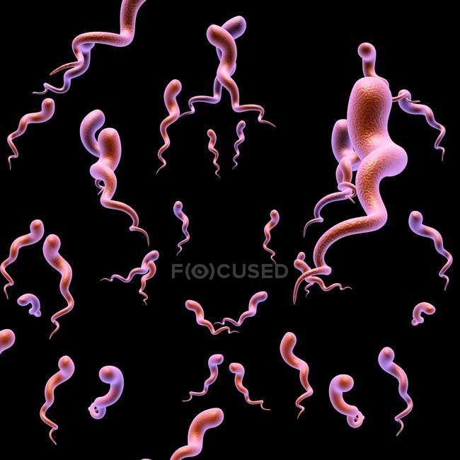 Syphilis bacteria shape and structure — Stock Photo